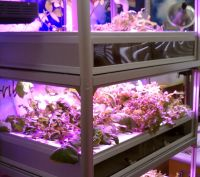 minifarm led grow-s